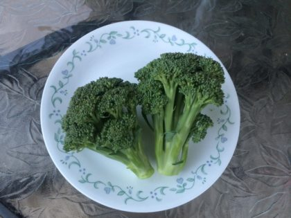 harvested hydroponic broccoli