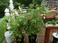 10 Pros and Cons Of Outdoor Hydroponic Gardening