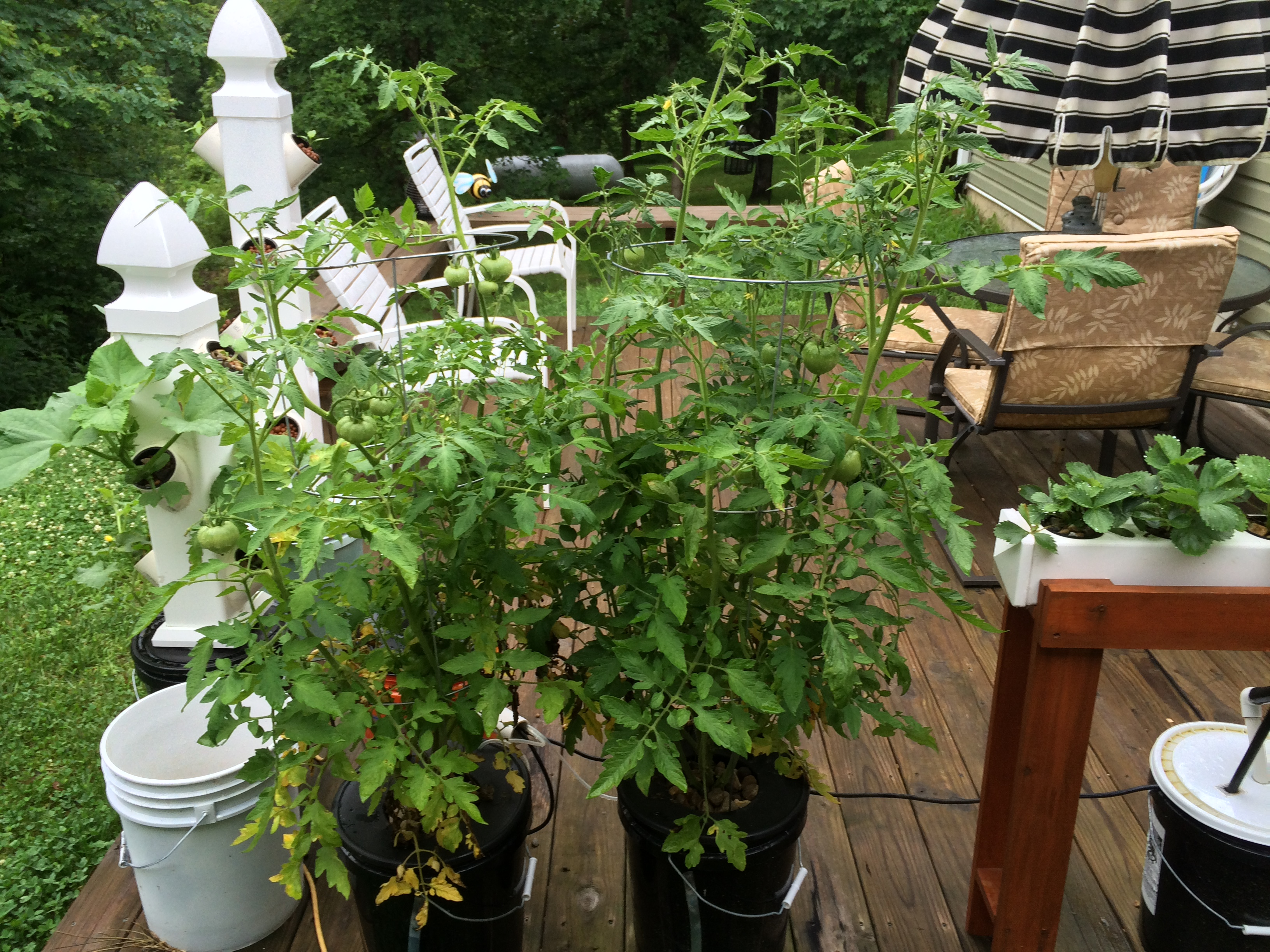 10 Pros And Cons Of Outdoor Hydroponic Gardening Nosoilsolutions