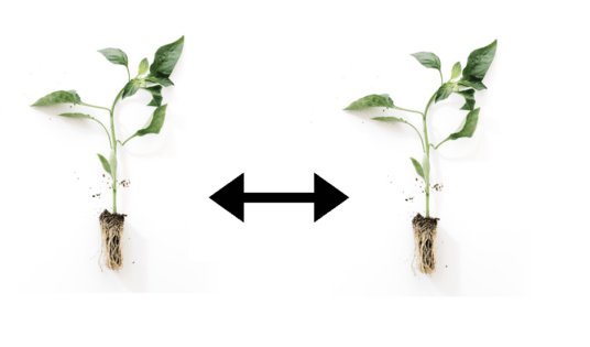 Simple guide to hydroponic plant spacing
