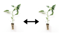 A Simple Guide To Hydroponic Plant Spacing