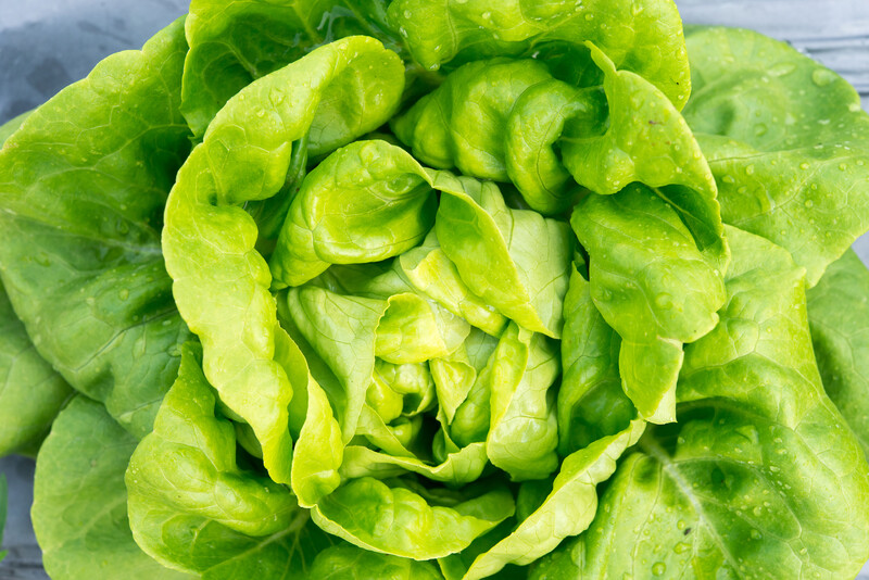 nutrition during hydroponic vegetative stage