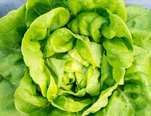 Nutrition During The Vegetative Stage Of Hydroponics