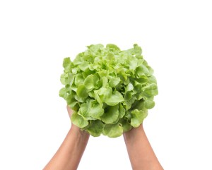Hydroponic Gardening Can Help You During A Crisis