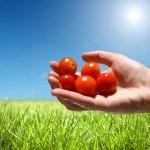 El Jitomate en el ombligo del mundo: 8 beneficios para la salud