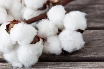 ¡Increíble! Dieta de las bolas de algodón
