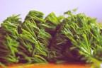 Algas marinas para adelgazar | Tipos de algas para perder peso
