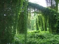 La imagen puede contener: planta, árbol, exterior y naturaleza