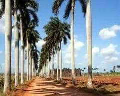May be an image of sky, road and palm trees