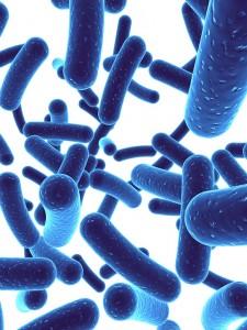 Bifidobacterium bifidum a Noster ProBiotics ingredient