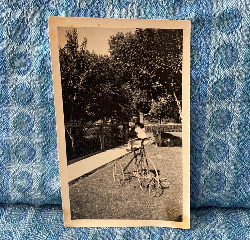 C. 1915 Original Snapshot of Dog on Steel Wheeled Tricycle in Front Yard