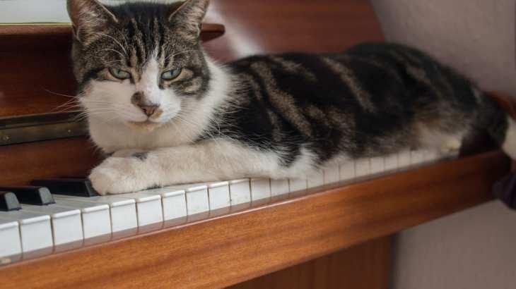 【7月6日はピアノの日】心地良いピアノの音と共にお酒を飲みませんか?