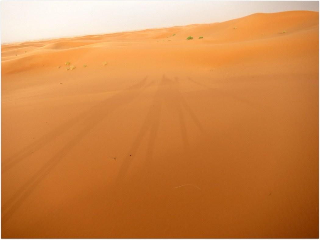 Sombras camellos