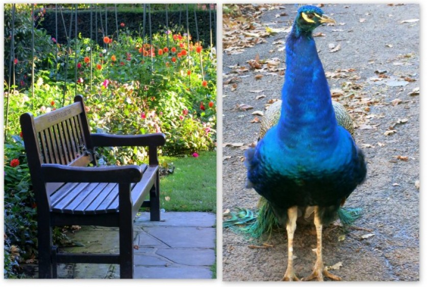 Holland Park collage