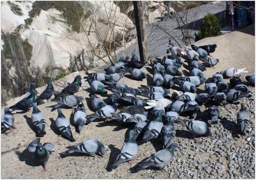 Palomas en la Capadocia