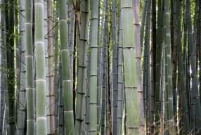 Notas desde el bosque de bambú de Arashiyama