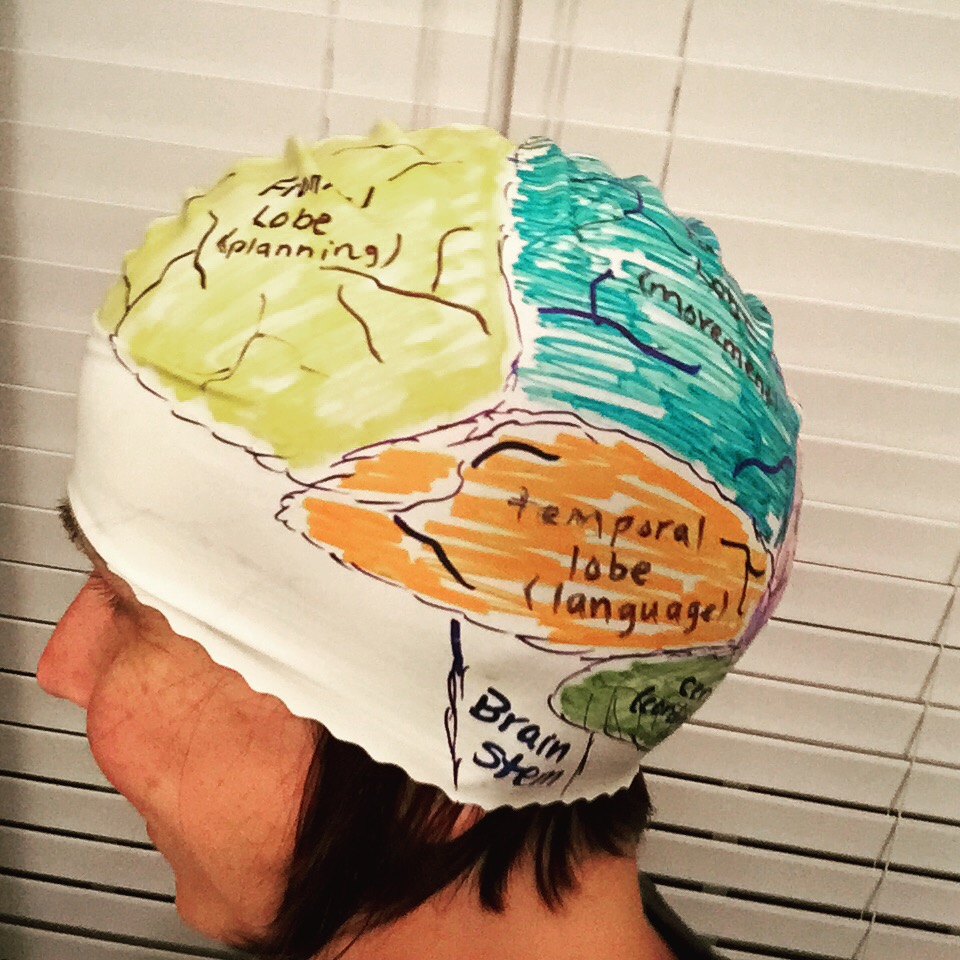 brain hat template - studying the nervous system with kids not before 7
