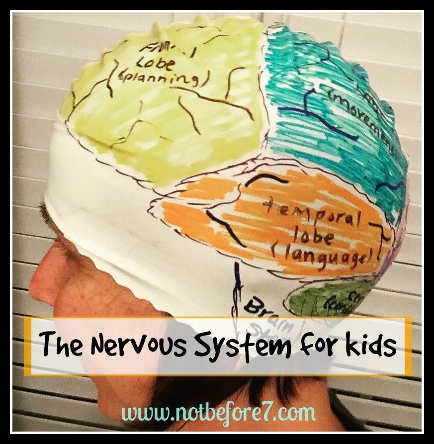 Studying the Nervous System with Kids - Not Before 7