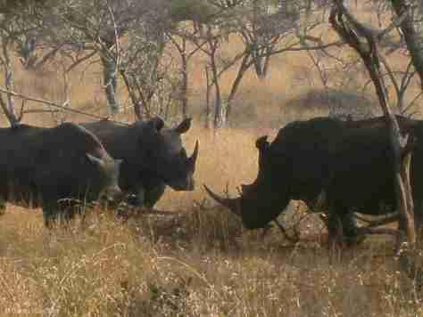 w rhino (1280x960)