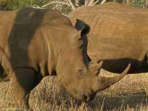 w rhino (4) (1280x960)