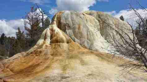 Mammoth Hot Springs (8)