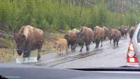 buf roadblock