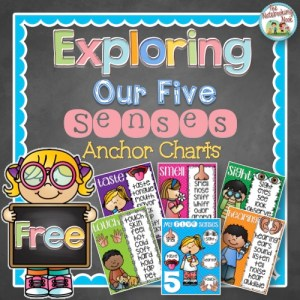Free Exploring Our Five Senses Anchor Posters