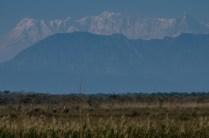 Serengeti oder Nepal?