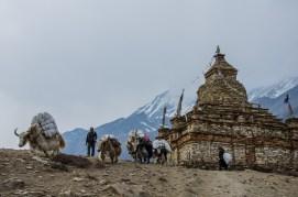 Stupa, Nar