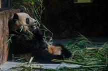 Bei den Pandas