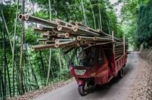 Bambustransporter