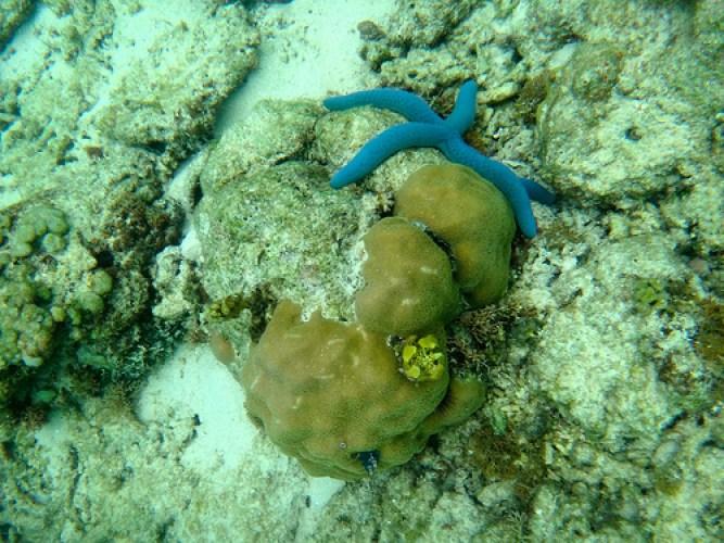 Palawan-Underwater1