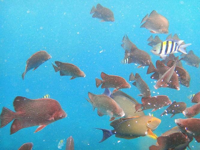 Palawan-Underwater2
