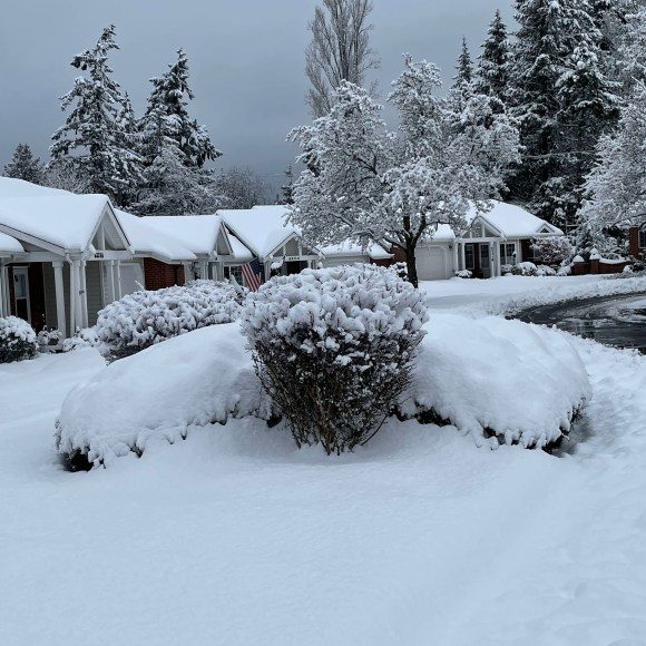 snow covering bushes, trees, and houses
