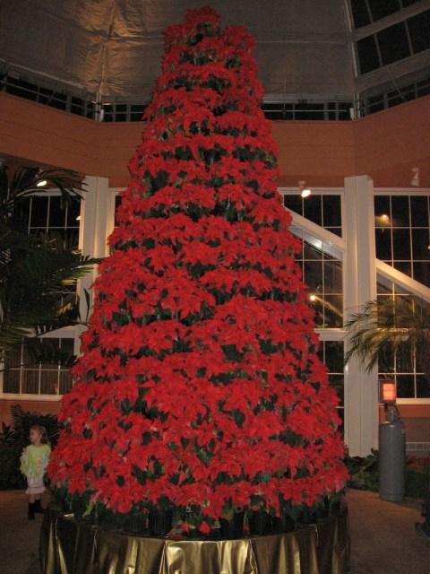 Celebration in the Oaks pointsetta tree