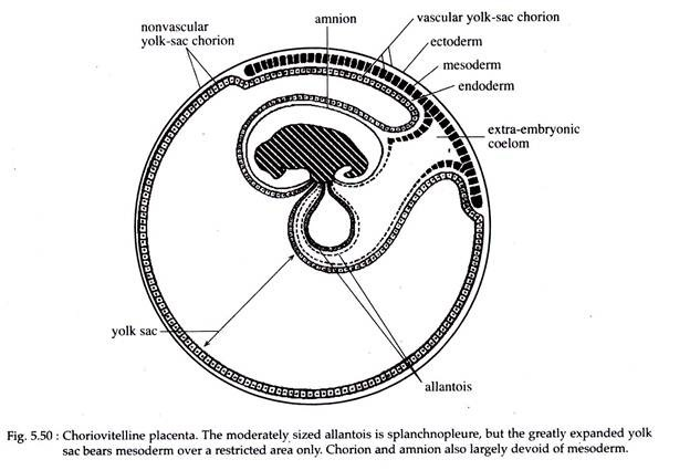 Placenta: Meaning, Types and Function