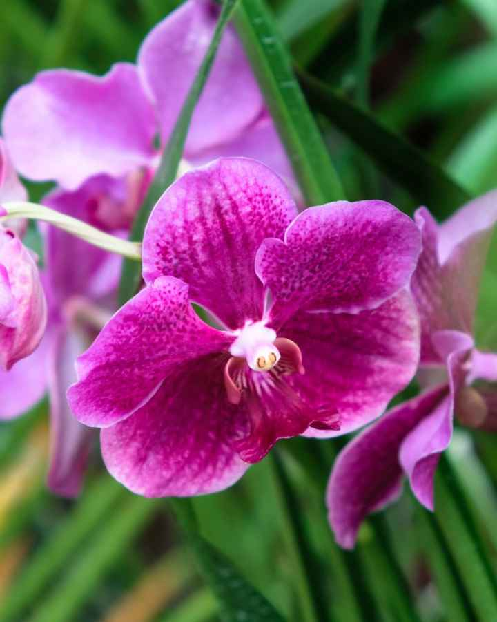Orchid in Singapore