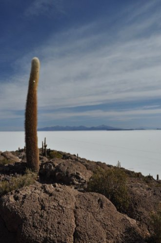 Incahuasi Island Salt Flats