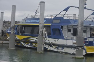 The Kaikoura whale watching boat