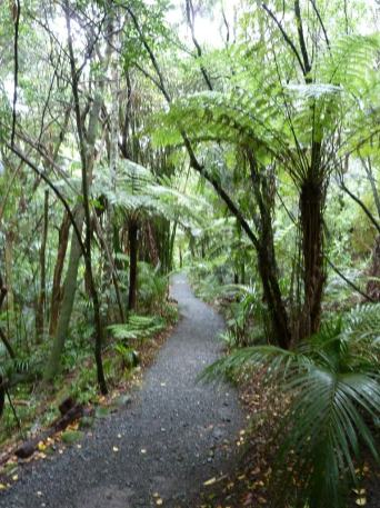 Path through Waipoua Kauri Forest