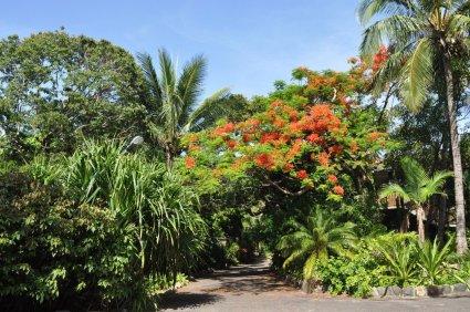 South Mole Island Jungle