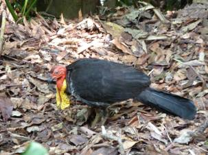 The strangest bird we saw on the Jungle Walk