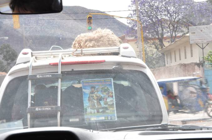 En-route we saw a local transporting a live sheep on top of his van