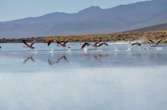 Bolivia, Flamingos