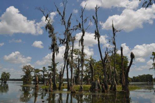 cajun swamp tour 11
