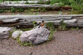 Glacier National Park 62