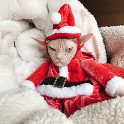 festive-pets20