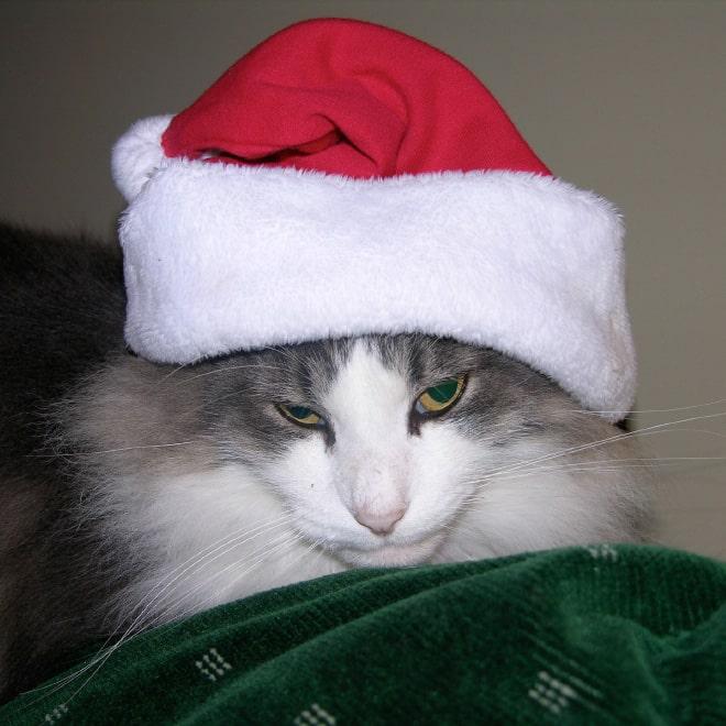 festive-pets21