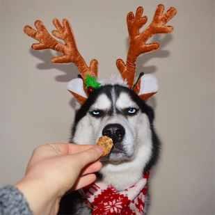 festive-pets1