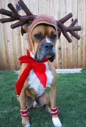 festive-pets8